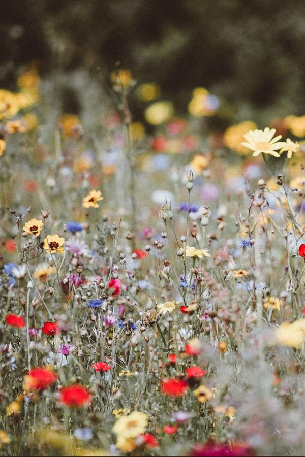 Flores de pradera