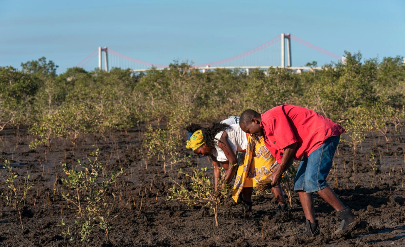 Mozambique eden forest miel castiza